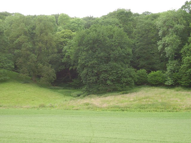 Oxleasow Coppice