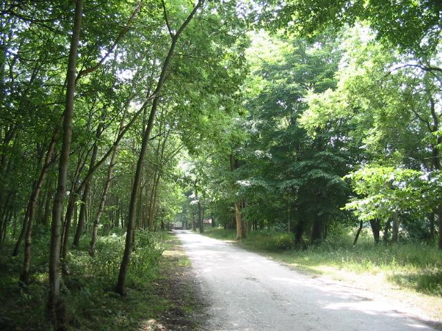 Woodland track close to Wykeham Lakes