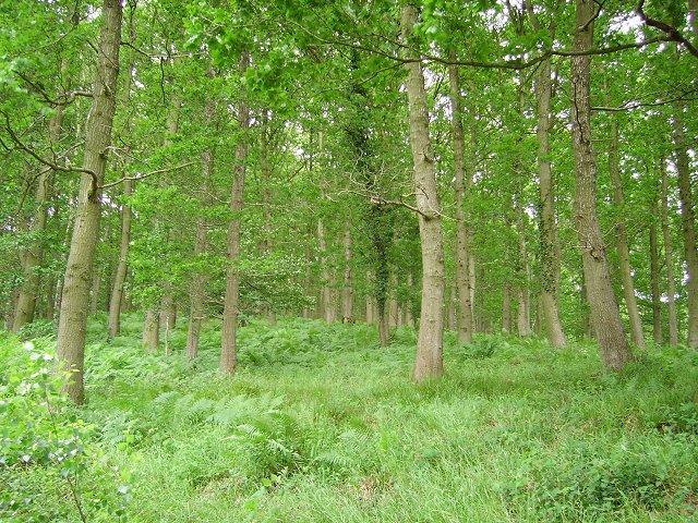 Sasel Wood