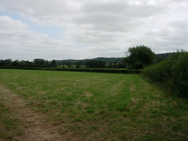 Hedge and field