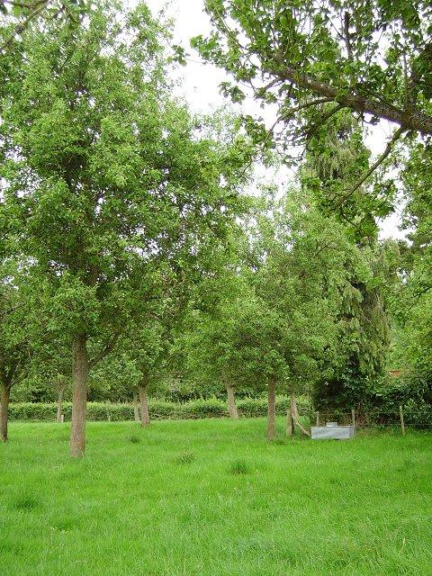 Orchard, Aston