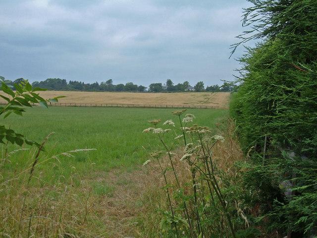 Footpath across Farmland