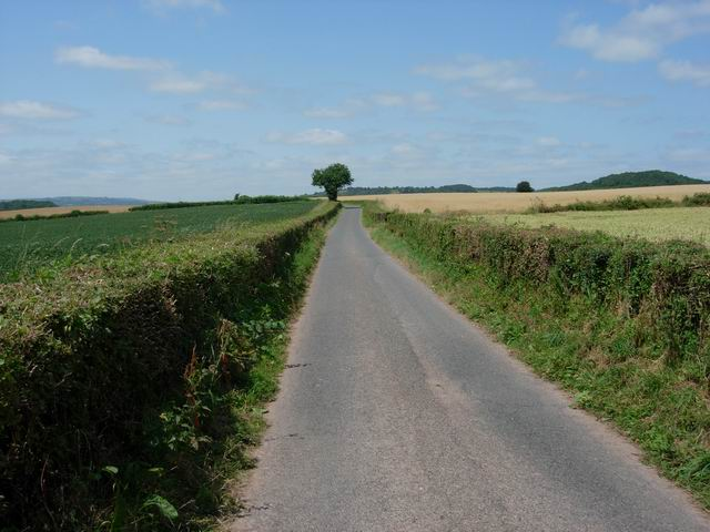 Small lane in Grey Valley
