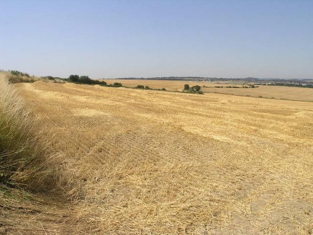 Bleached Fields
