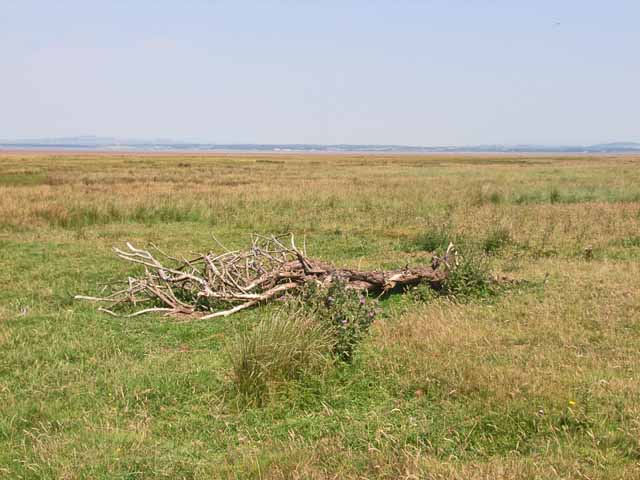 Solway marshes at Carndurnock