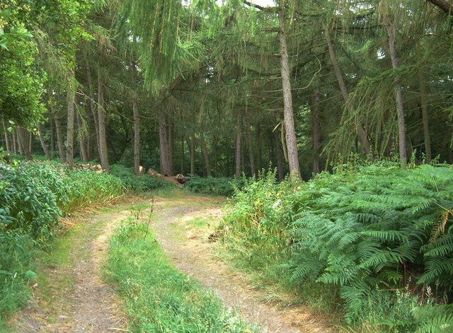 Parkin's Wood, Spofforth Haggs