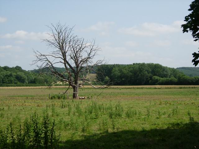 Weedy field and dead tree