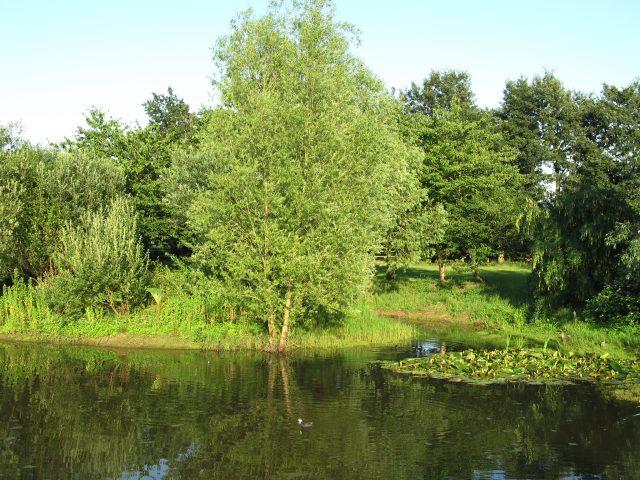 Pond at Bosmere Farm