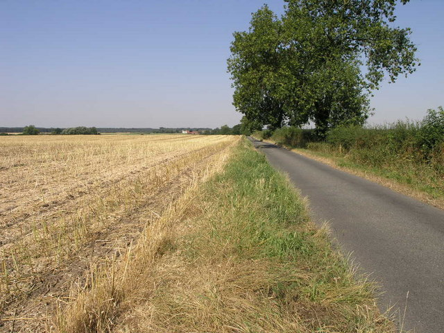 Field and Lane and Tree
