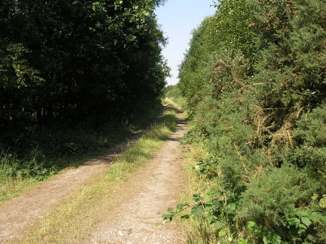 Laughton Wood