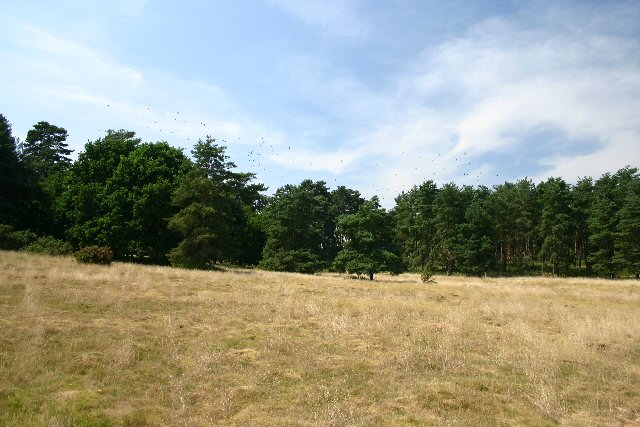 Open access land, Little Heath