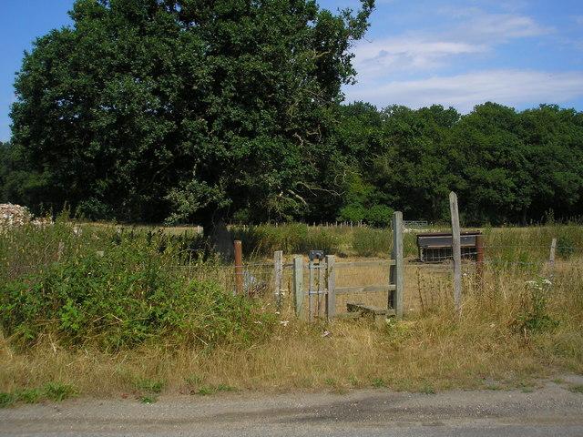 Footpath near Jesmor Farm, Surrey