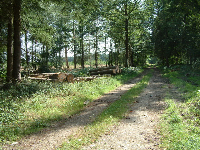 Common Plantation, Alderbury