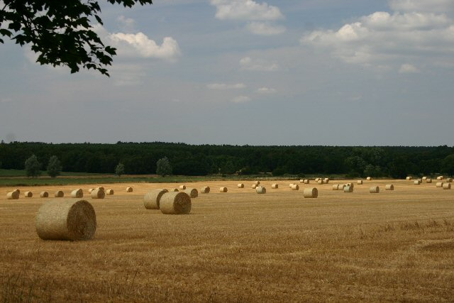 Harvesttime at West Stow