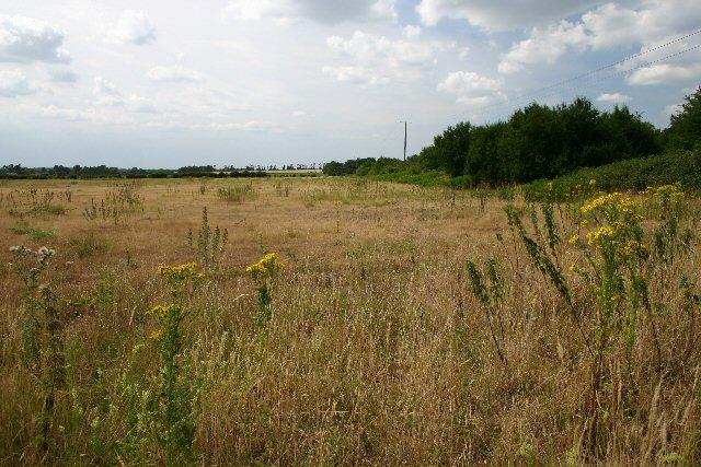 Field margin at Icklingham