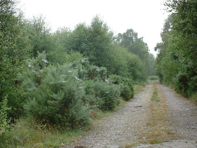 track to Achederson Farm