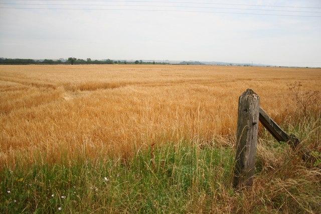 Farmland at Thorpe le Fallows