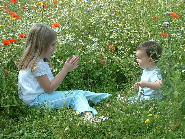 Wheeldon Copse Wildflower Meadow