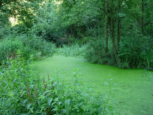 Stagnant pond