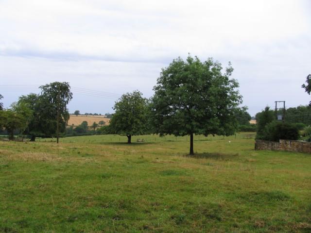 Fields by Ayston