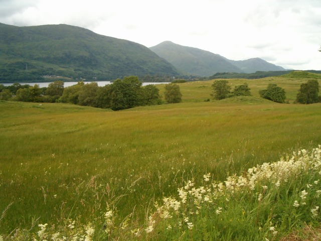 Summer meadows