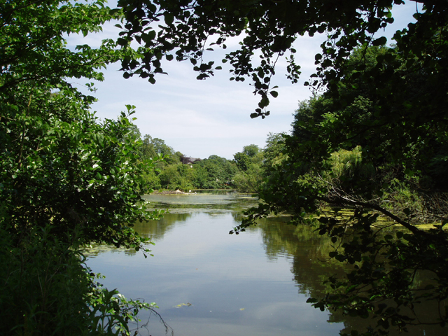 Blackford Pond