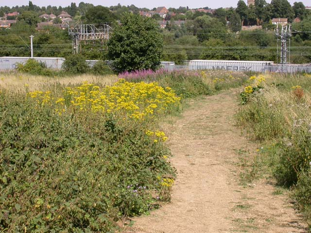 View towards a Railway from a Bridleway