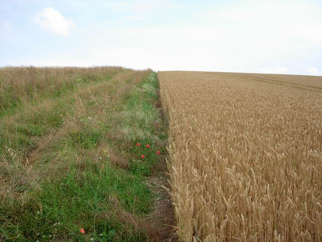 Wheat and path