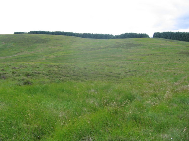 Rough border sheep pasture