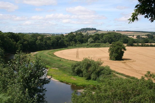 Wheat Fields by the River Wye