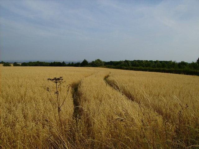 Arable land near High Park Farm