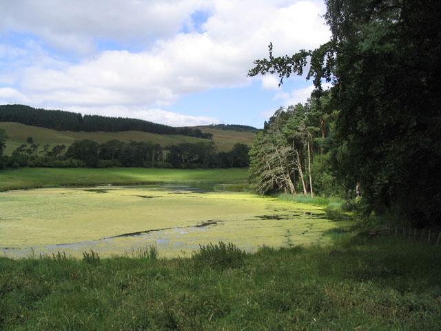 Hollybush Pond