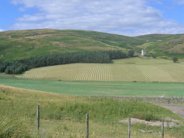 Patterned Field in Ettrick Valley