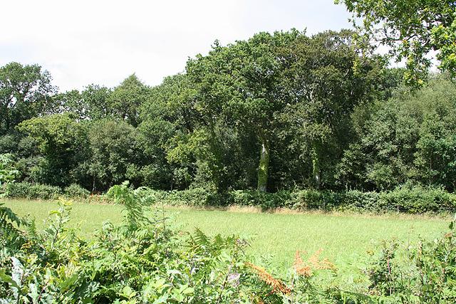 Spreyton: Higher Moor Plantation