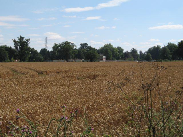 A schooling in wheat