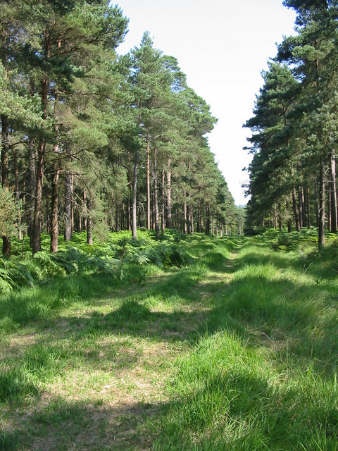 Forest ride Slufters inclosure New Forest Hampshire