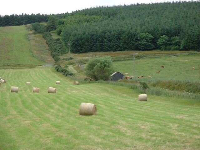 Sheep fold above Lemlair farm