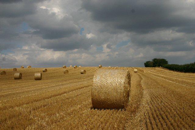 Harvest time at Barham