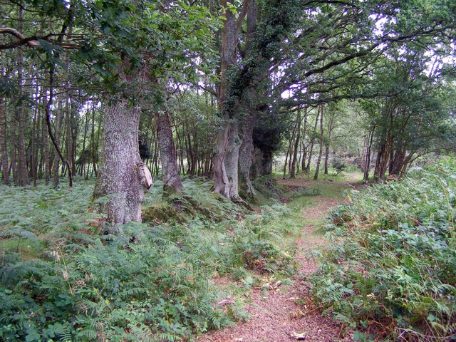 Enclosure on Copythorne Common