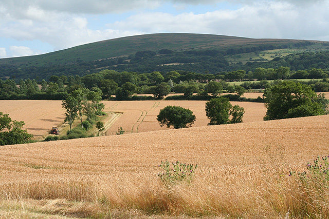 Sampford Courtenay: towards Cosdon Hill