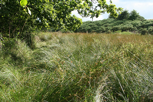 Sampford Courtenay: path to Alfordon Manor