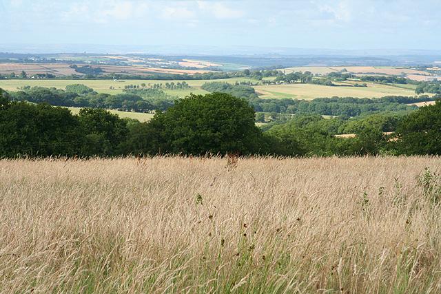 Sampford Courtenay: towards Lake Moor