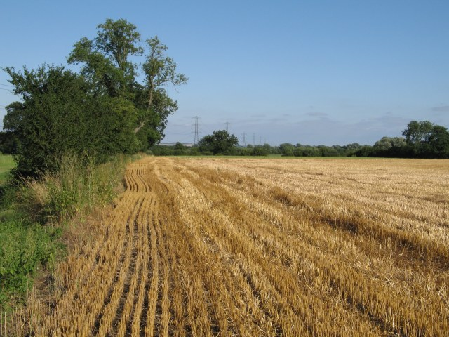 Recently harvested field of wheat