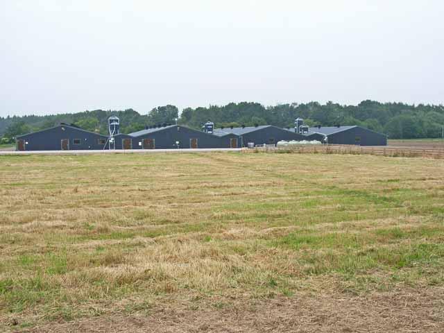 Livestock sheds at Holme Ends Farm, Newby East