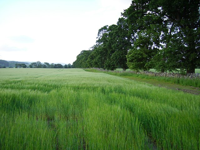 Conon flood plain