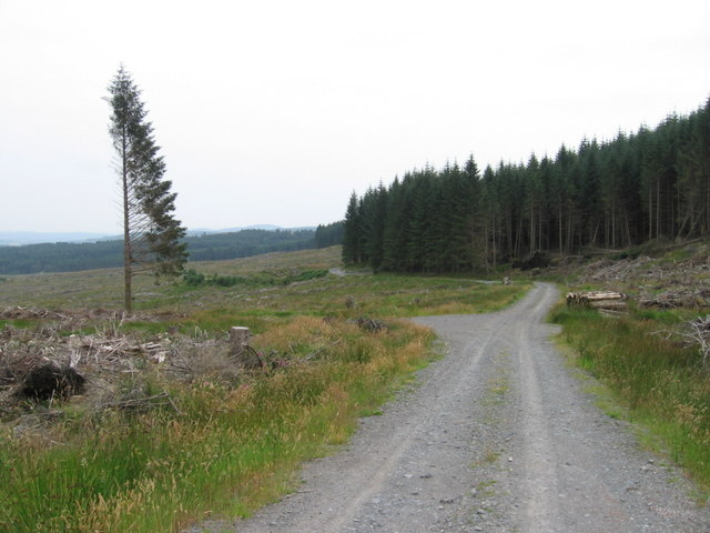 Forest track in Forrest Estate