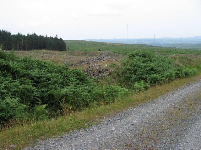 Felled woodland