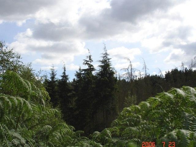 Norley - Delamere Forest