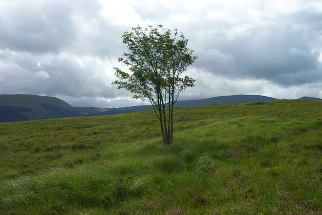 Lonely tree Southeast of Moel Siabod