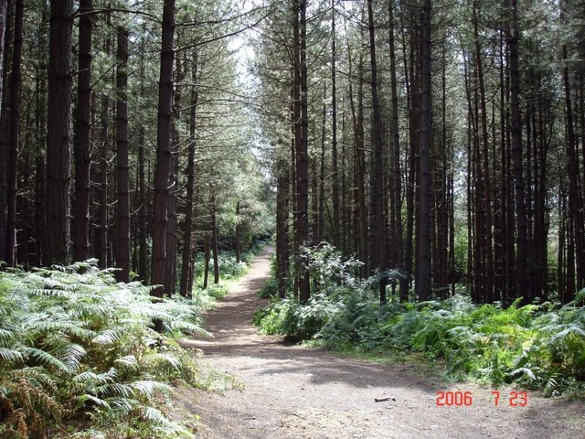 Oakmere - Delamere Forest:: OS grid SJ5671 :: Geograph Britain and ...